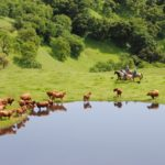 Preserving an Environmental Relationship